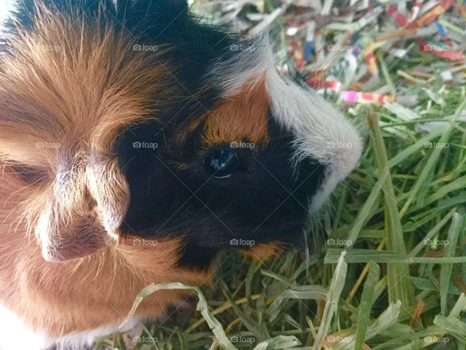 Mammal, Cute, Animal, Little, Nature