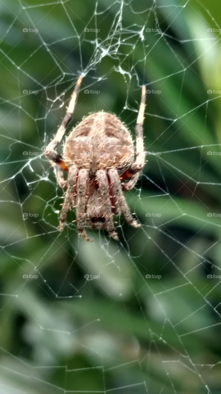 Spider, Arachnid, Spiderweb, Trap, Cobweb