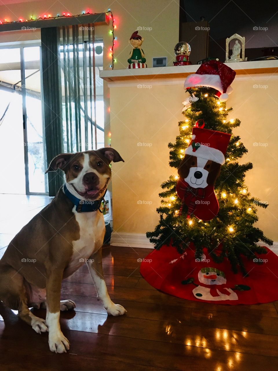 Smiling rescue red nose pitbull next to a puppy Christmas tree