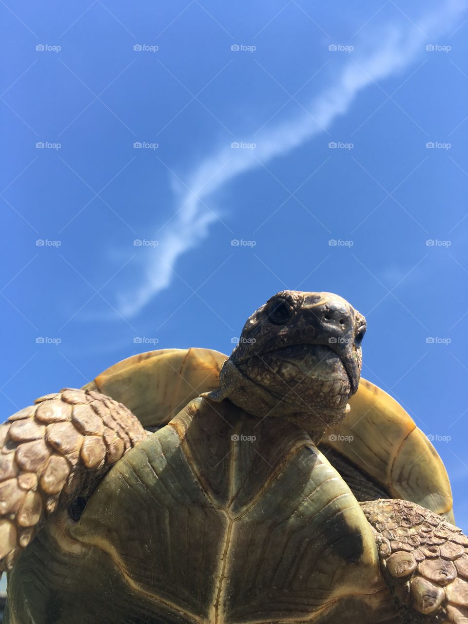 Turtle in the sky