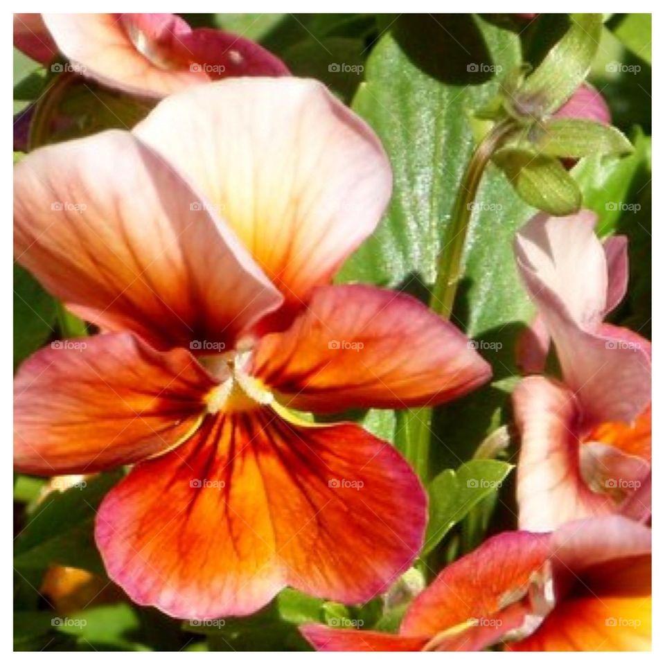 Multicolored Flower Closeup