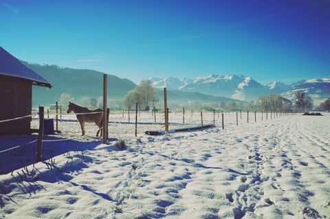 Horse in ranch in winter