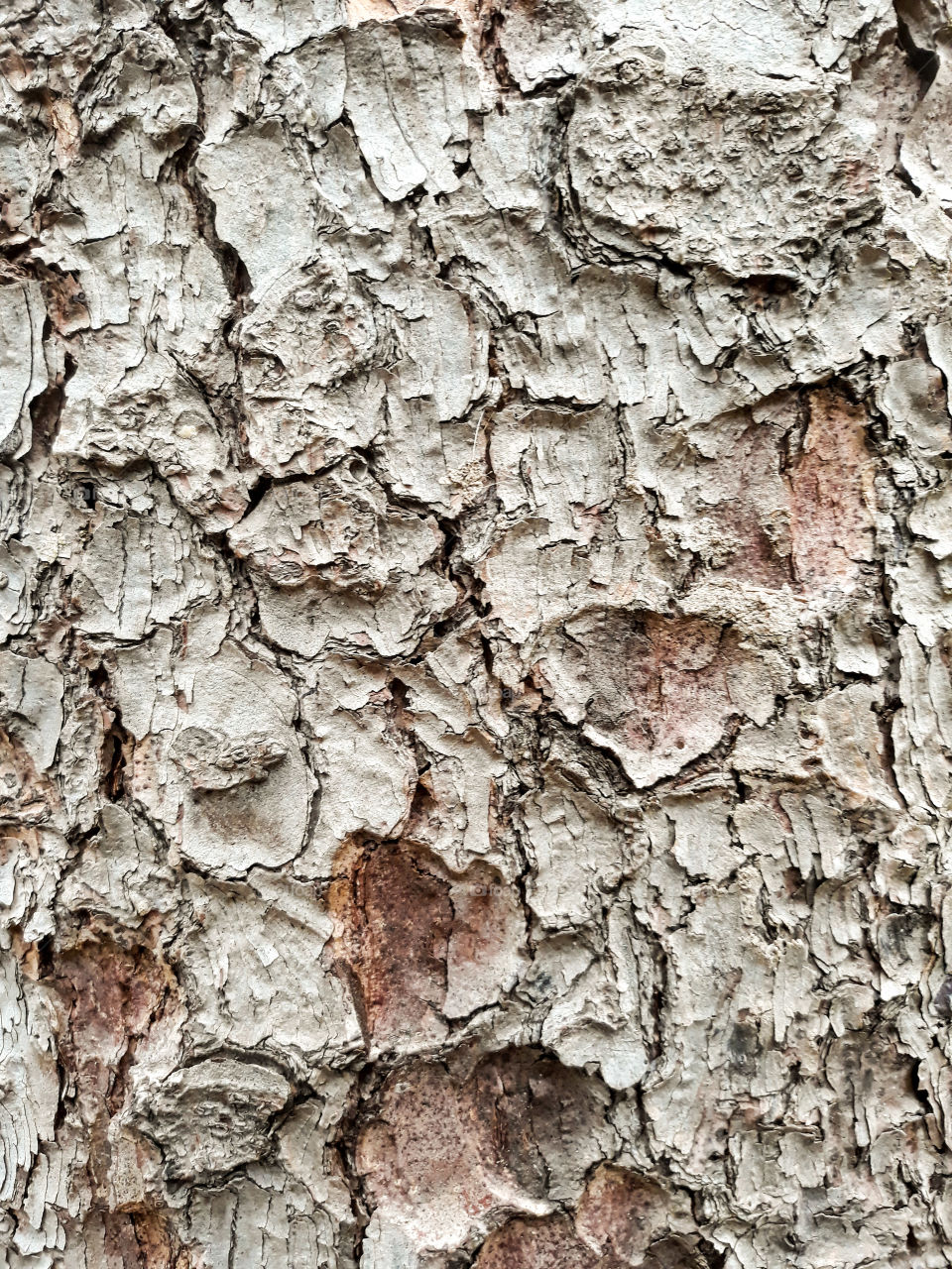 Photo close up of tree bark in an italian park