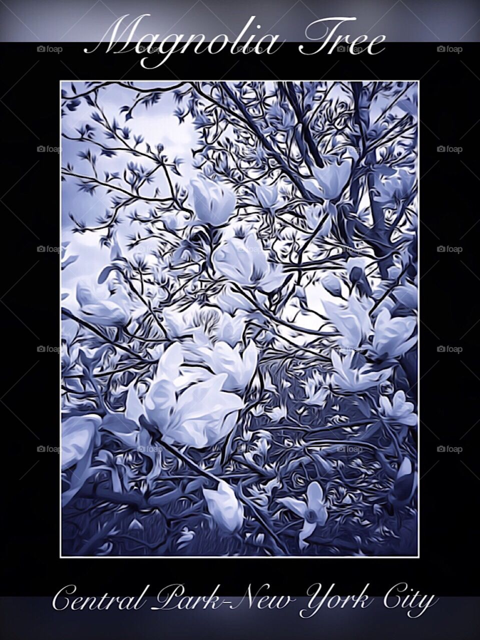 Magnolia Tree, Central Park-New York City. Instagram,@PennyPeronto