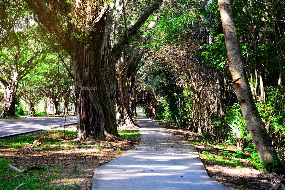 Path through Spanish moss