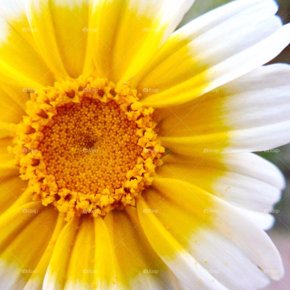 Sun shine by a flower