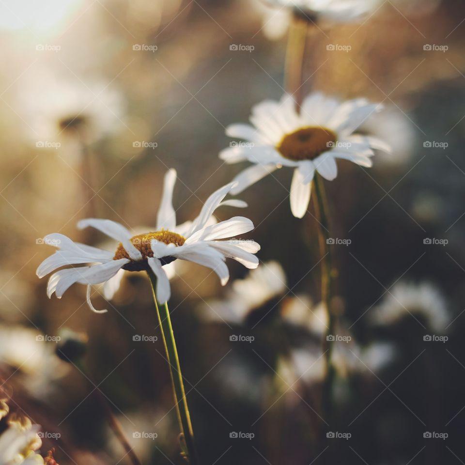 Nature, Flower, No Person, Flora, Summer