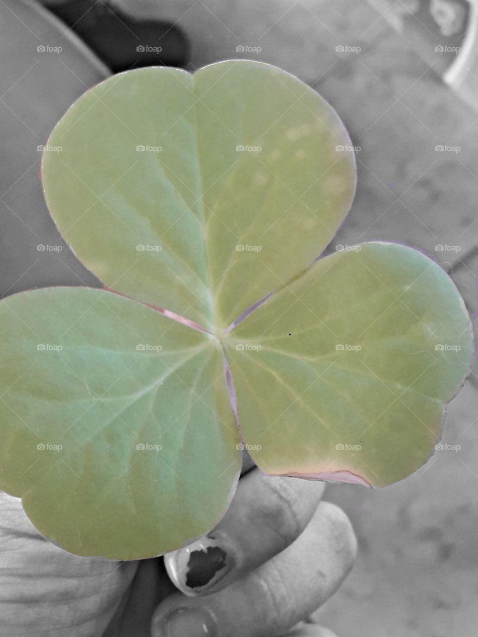 black and white andi hold one big green leaf