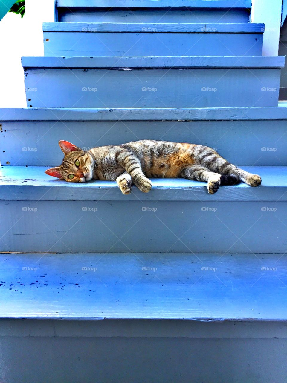 Cat laying on the staircase, Lazy cat lounging, Cat laying on the stairs, Cat acting lazy, Cat on the stairs, Cute Cat Portrait