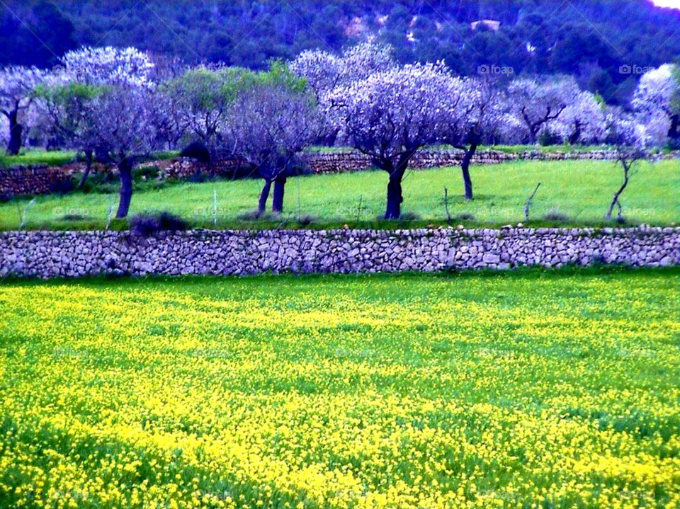 flowers field yellow nature by merethe