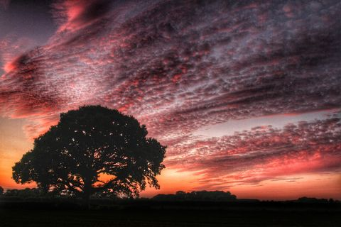 Silhouette of tree against dramatic sky