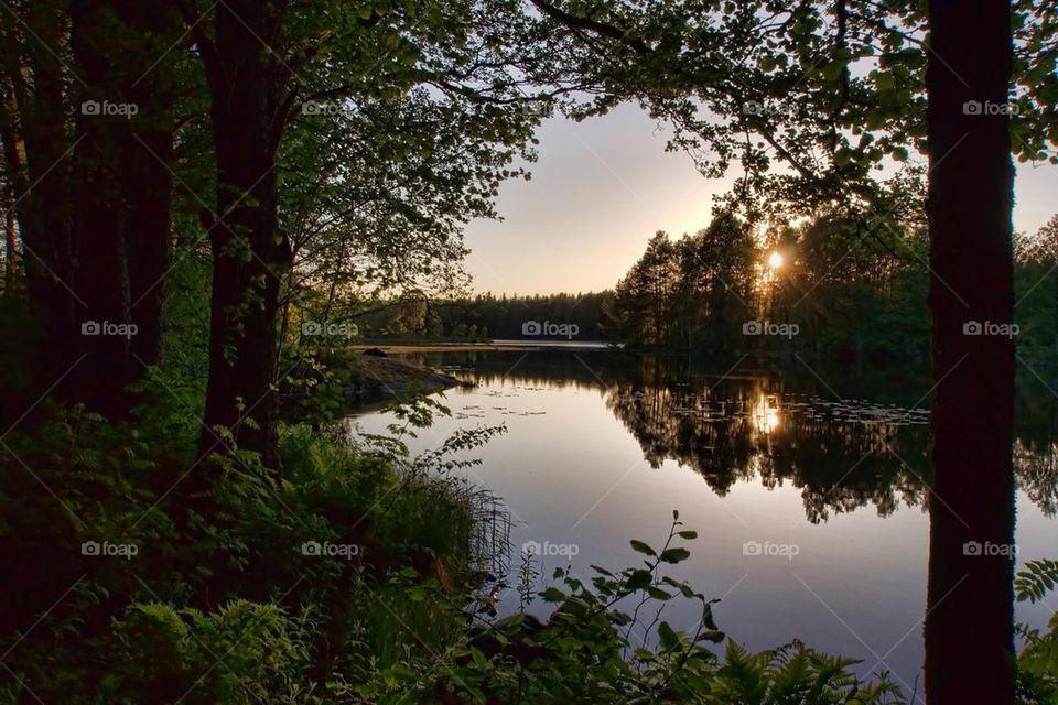 sommar trees water lakes by cekari