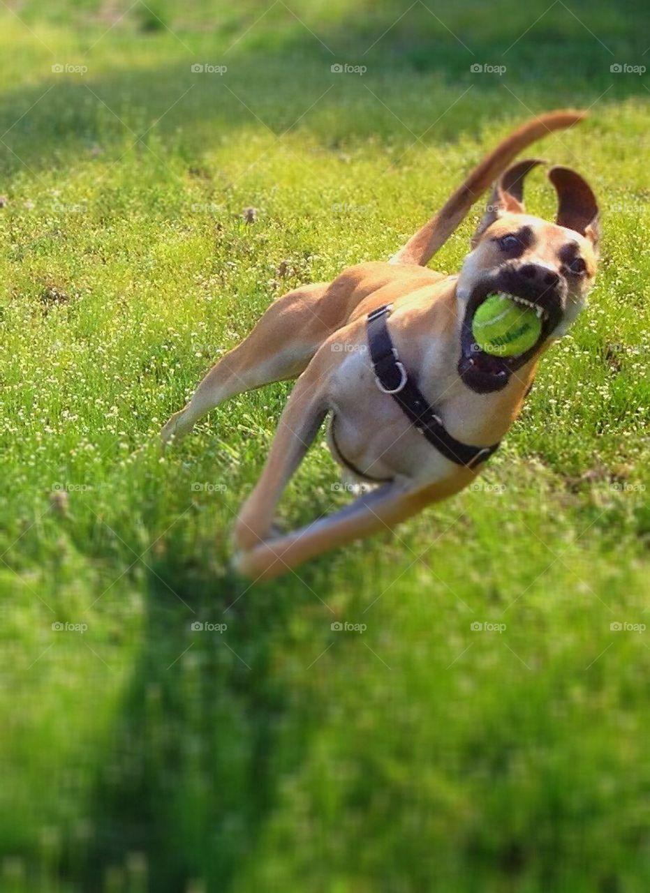 I've got the ball!