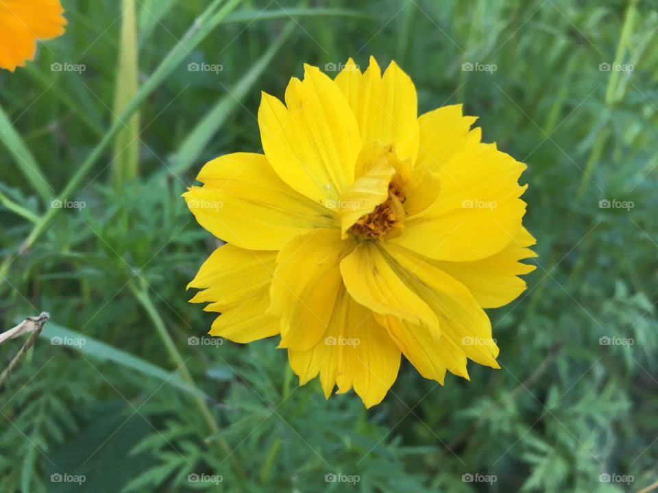 Elevated view of yellow flower