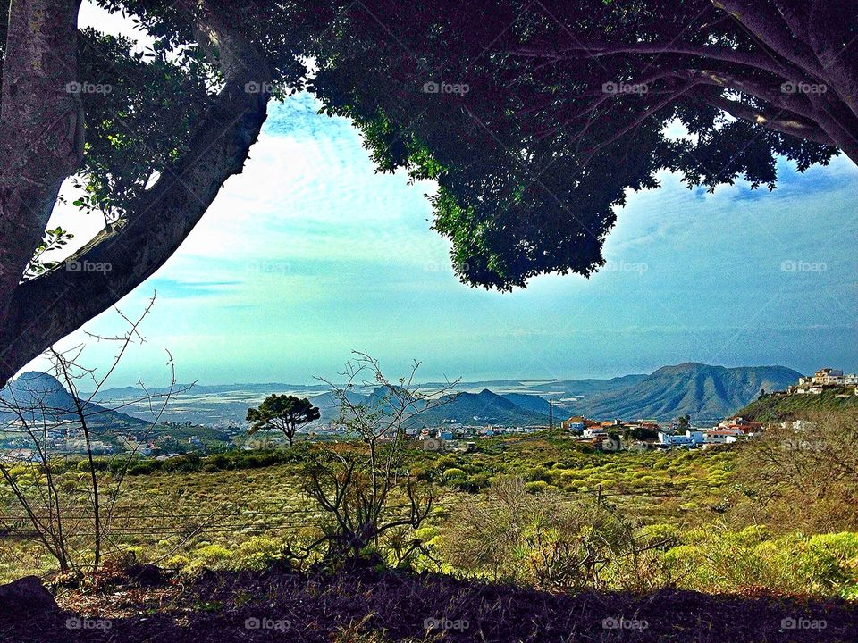 Scenery Tenerife