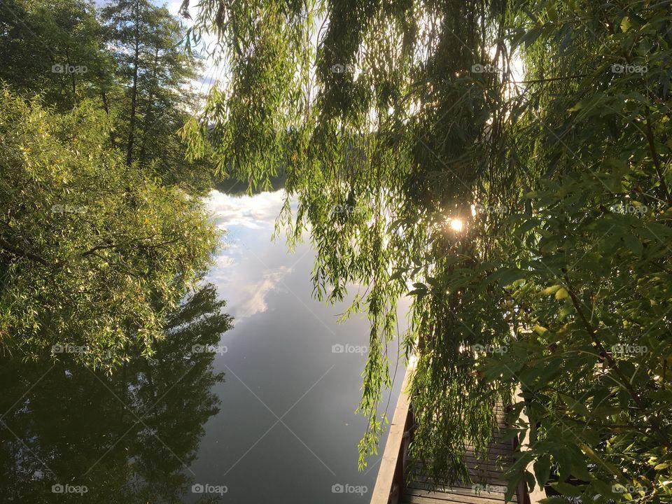 Birch tree at the lake