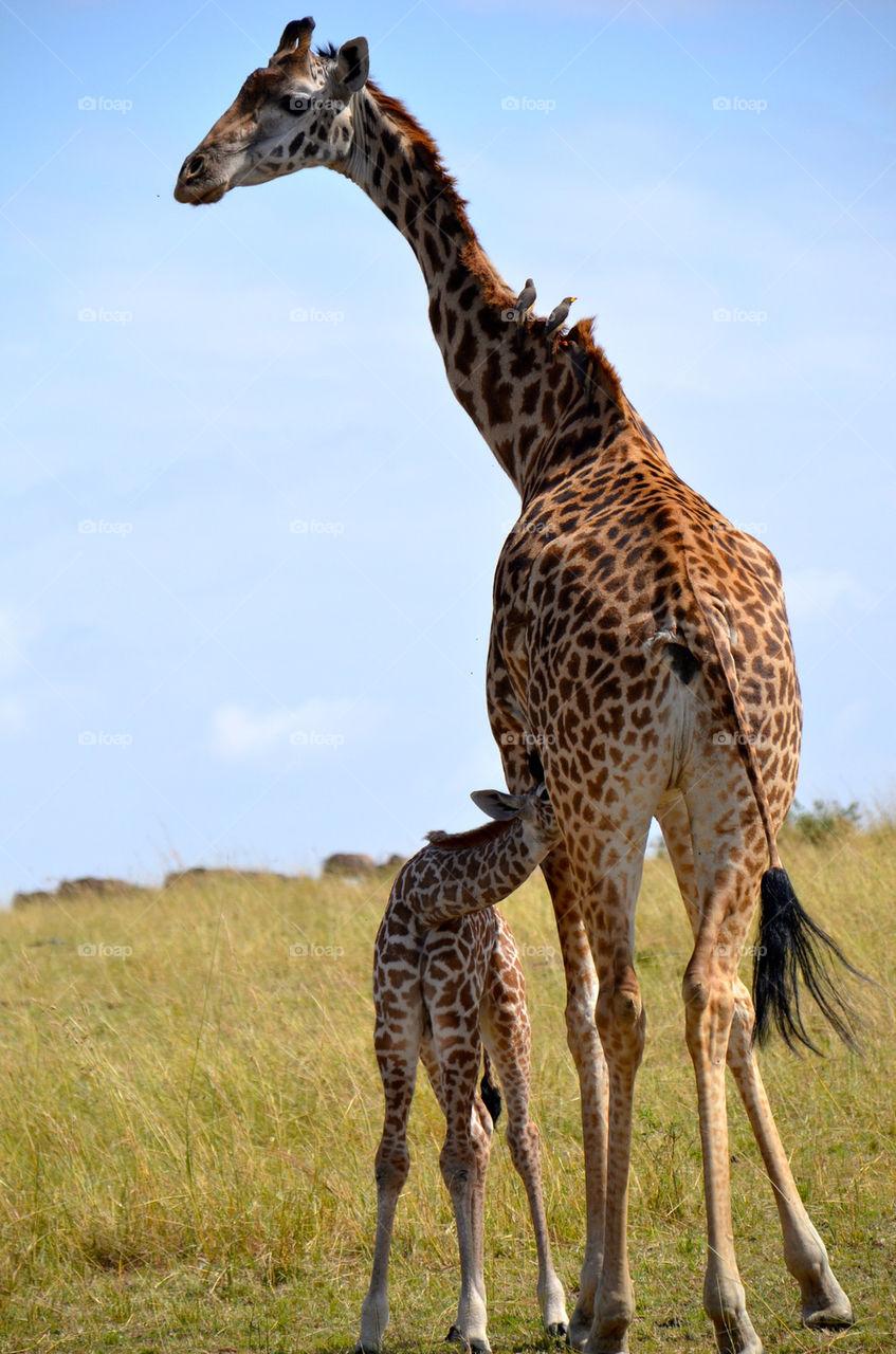 baby animal mammals africa by hunter_dude99