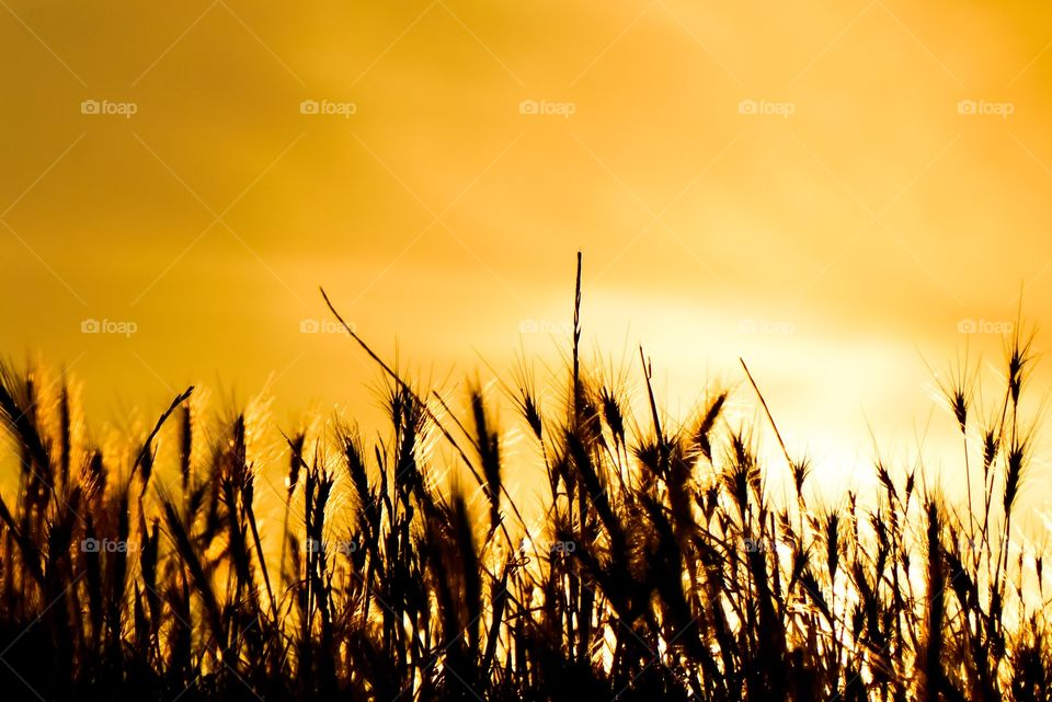 Grasses - Golden Hour - If theres a moment when it's perfect It will cover me as the sun goes down