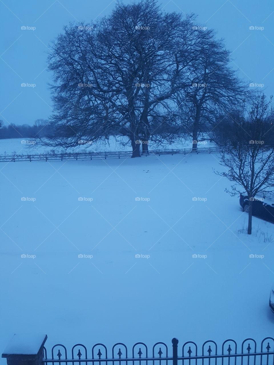 Winter, Tree, Landscape, Cold, Snow