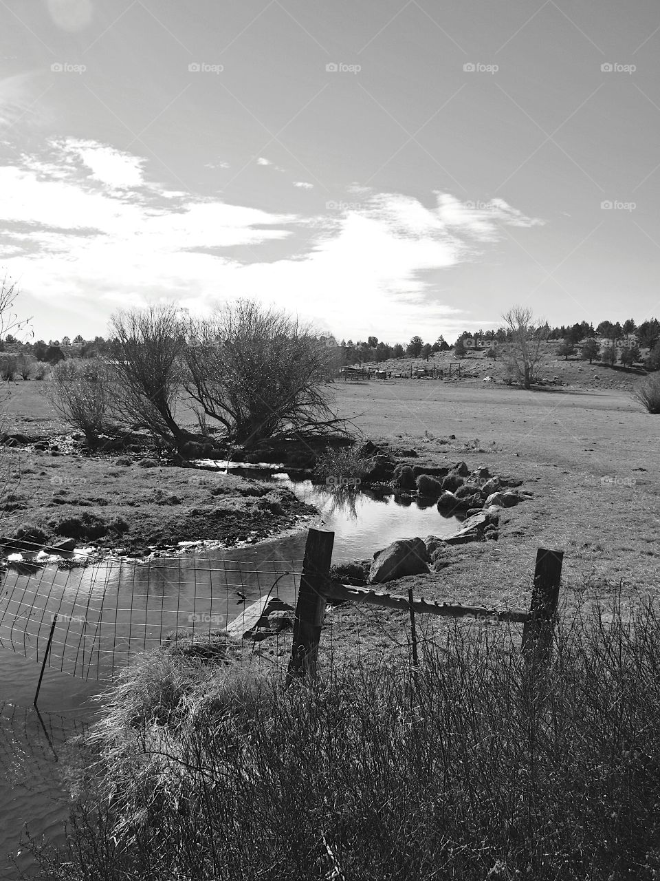 A creek running through a ranch field on a clear day in Southern Oregon.