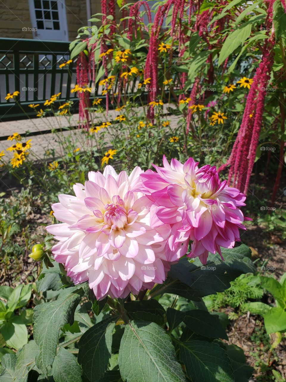 Flowers in sunshine