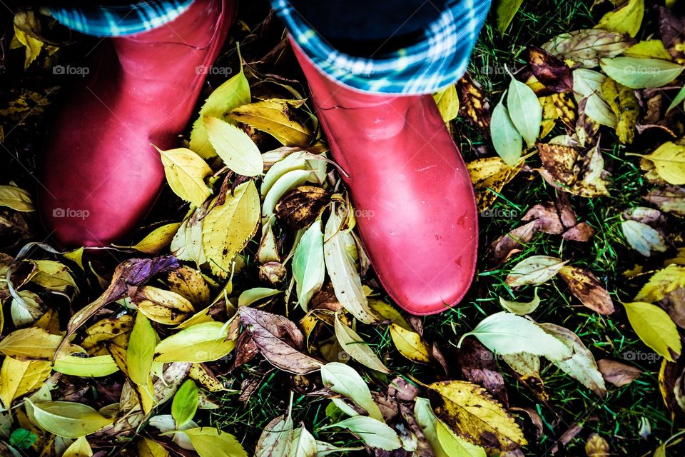 Autumn in the garden. Yellow autumn leafs and red rubber boots
