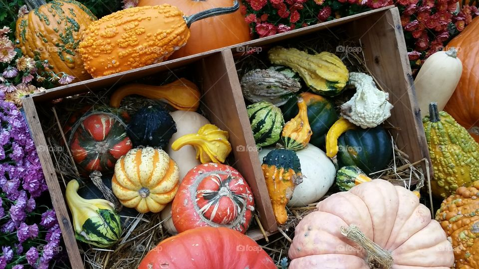 Gourds and pumpkins for sale