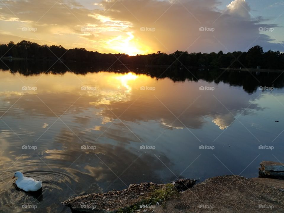 Sunset, reflections , nature, and wildlife provide serenity after a hectic day