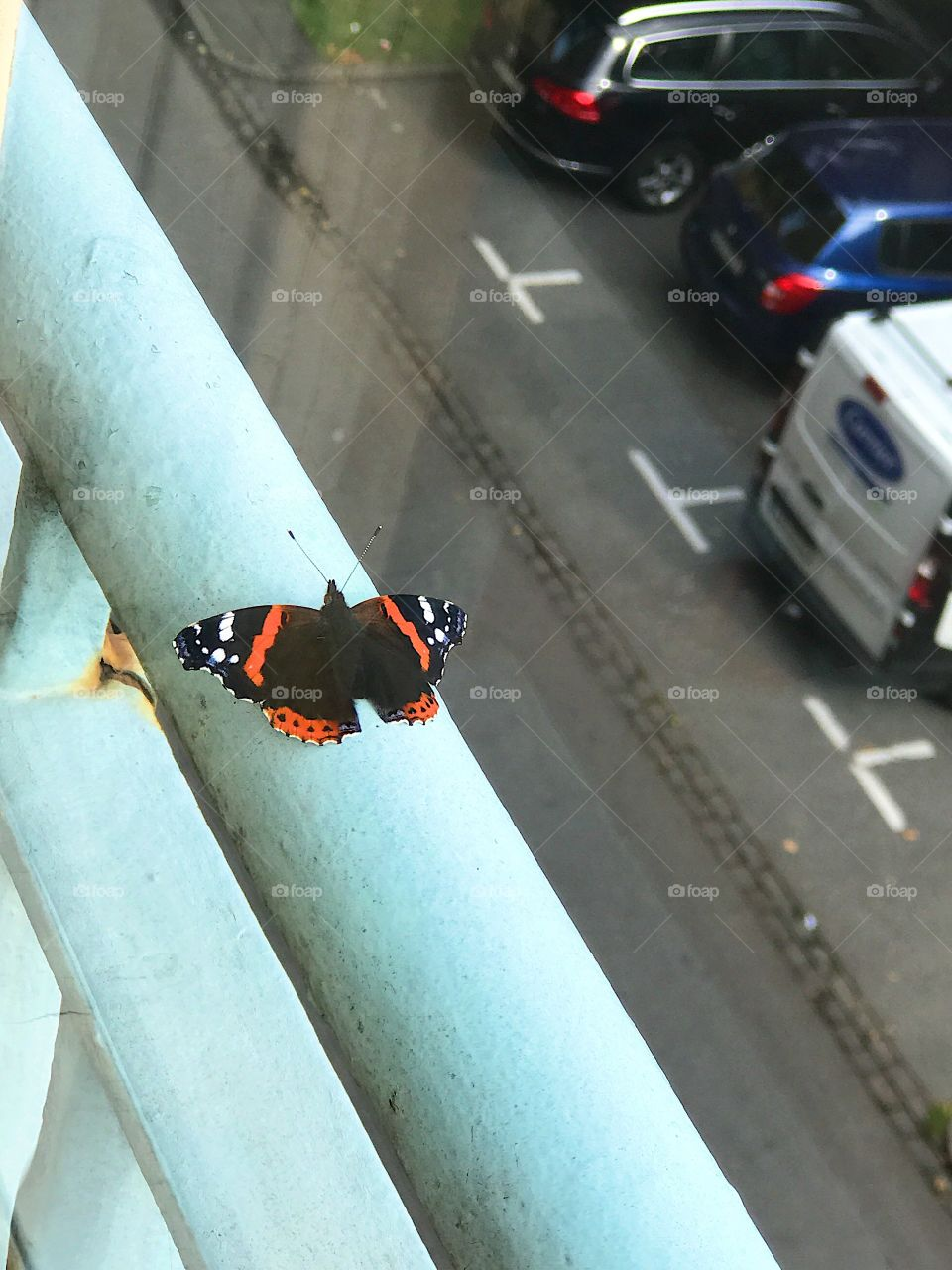 Butterfly on a balcony in the city