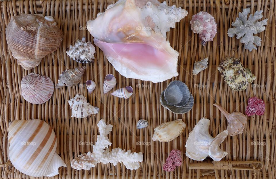 large collection seashells on wicker with coral