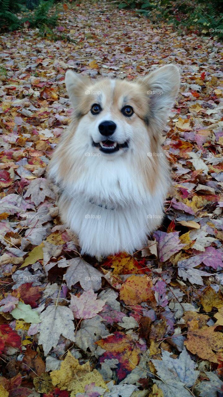 Fun times in leaves