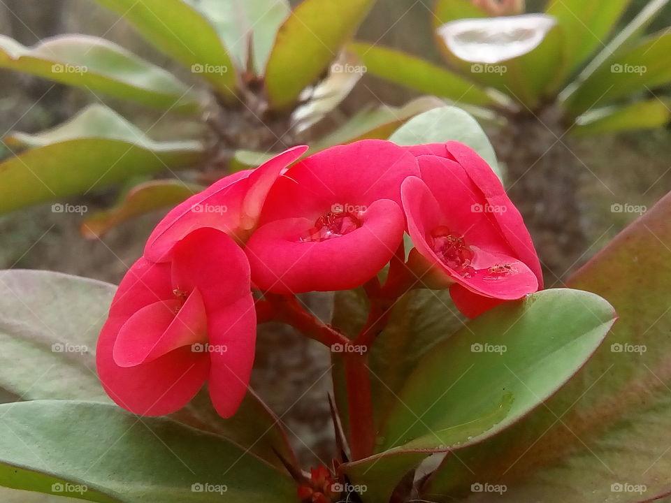flower 2017/09/27  051  #আমার_চোখে #আমার_গ্রাম #nature #flower #eukaryota #plantae #angiosperms #eudicots