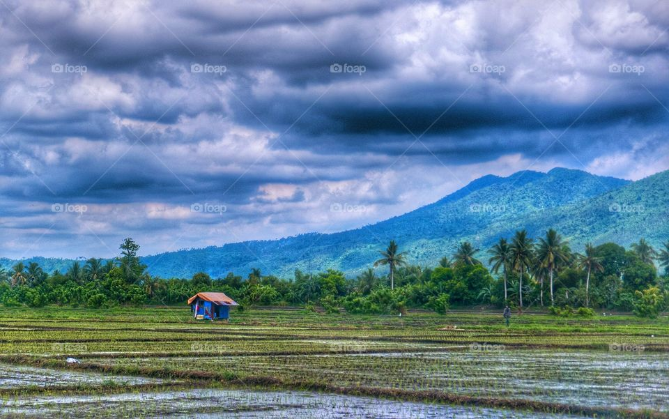 Paddy field against cloudy sky