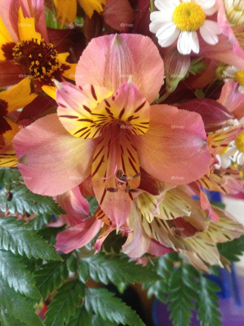Friendship Flower. Friendship Flower