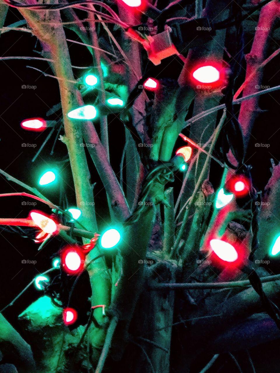 Lights On Tree.