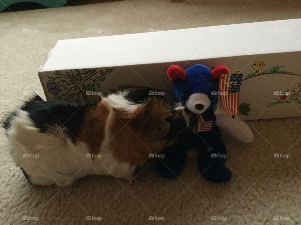 Cat, Mammal, Dog, Room, Furniture