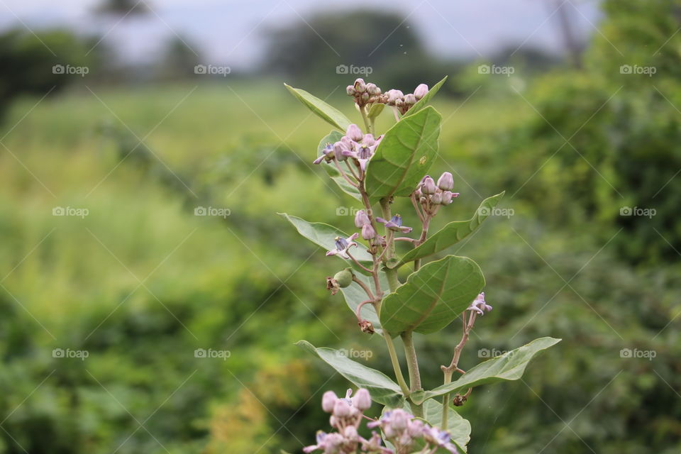 Nature, Tree, Summer, Leaf, Flora