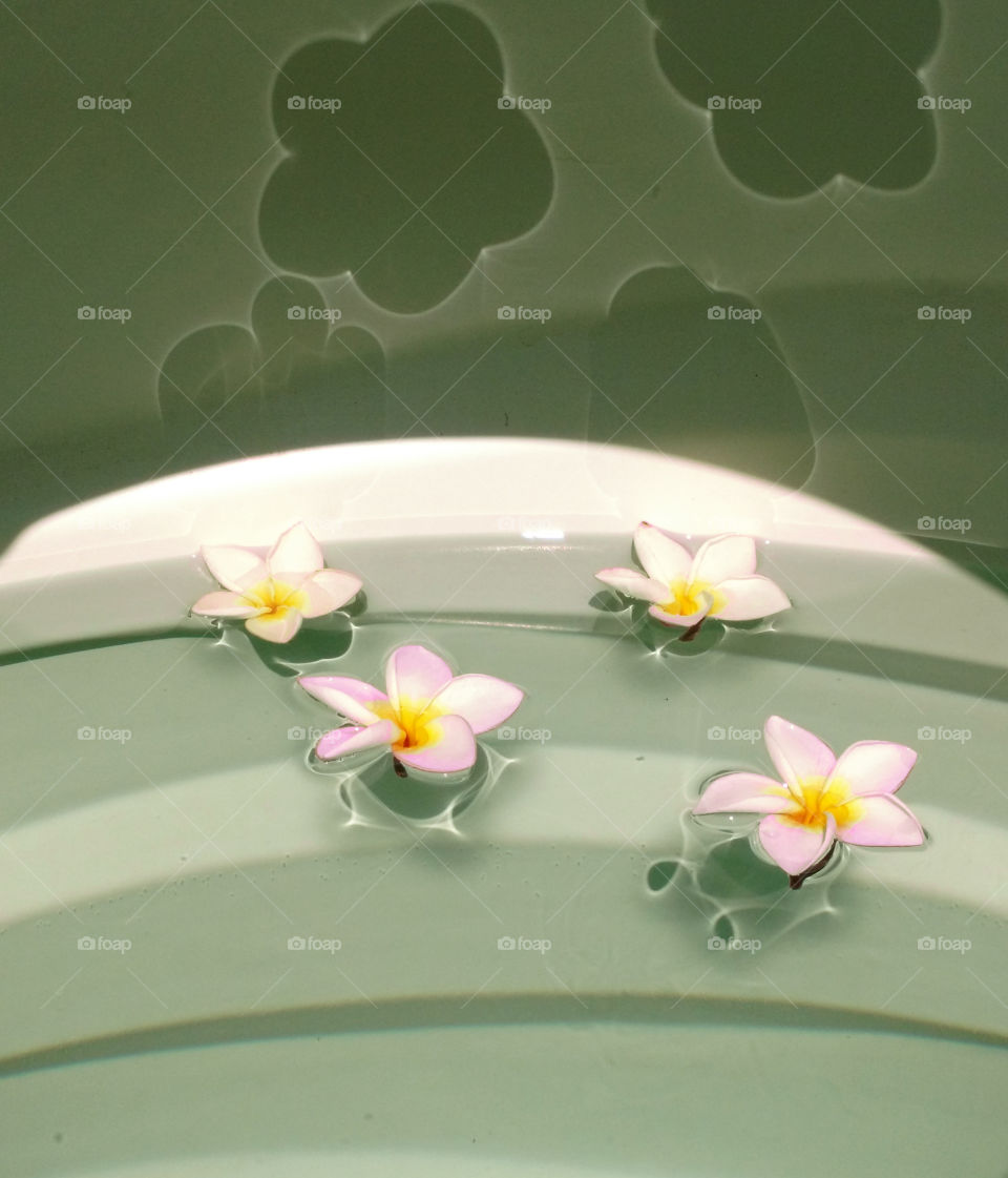 frangipani flowers reflection in water tank