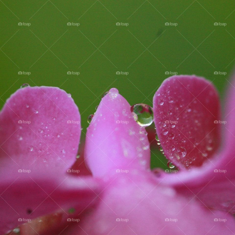Water drop on orchid flower