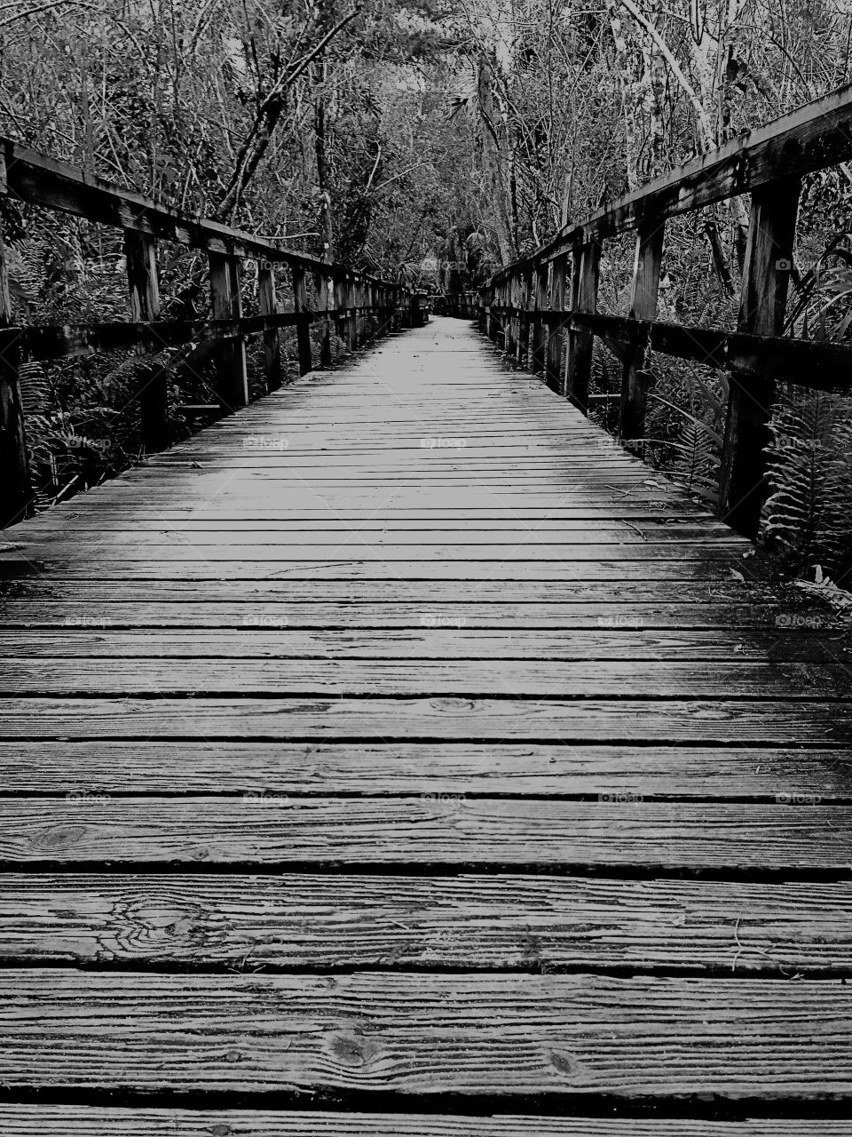 Boardwalk through the tropical forest in mysterious monochromatic tones.