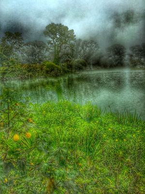 Lake with fog in Goldengate Park San Francisco