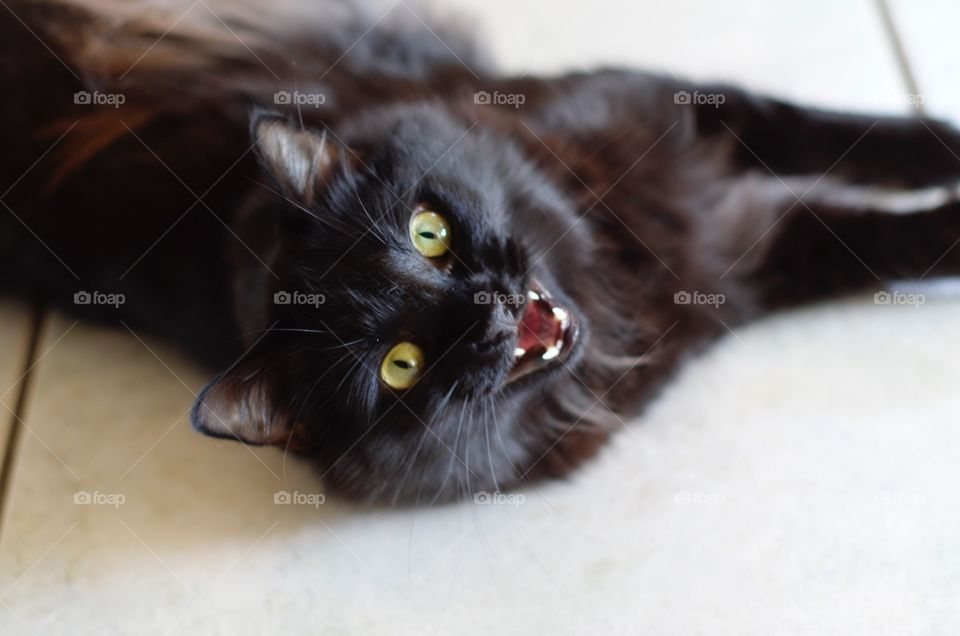 My cat saying hello.