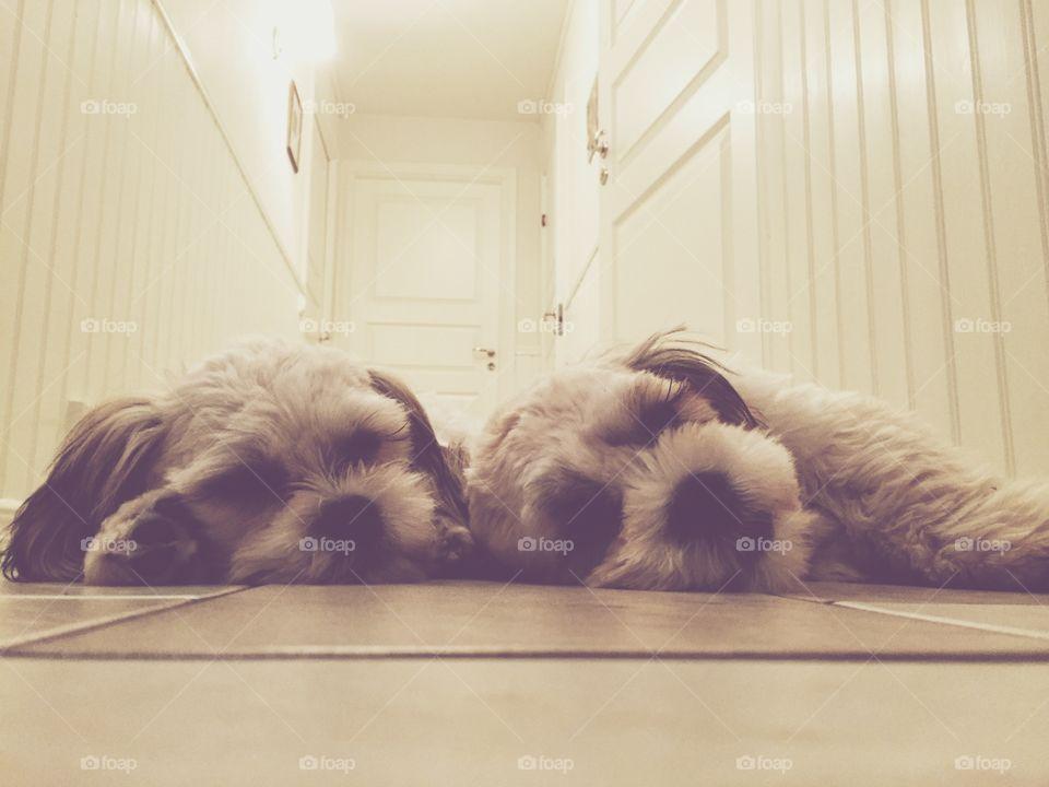 Sleepy dogs