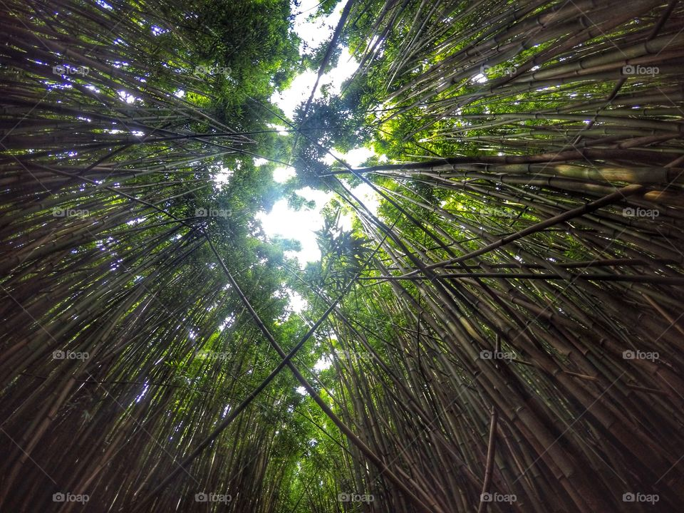Magical bamboo forest