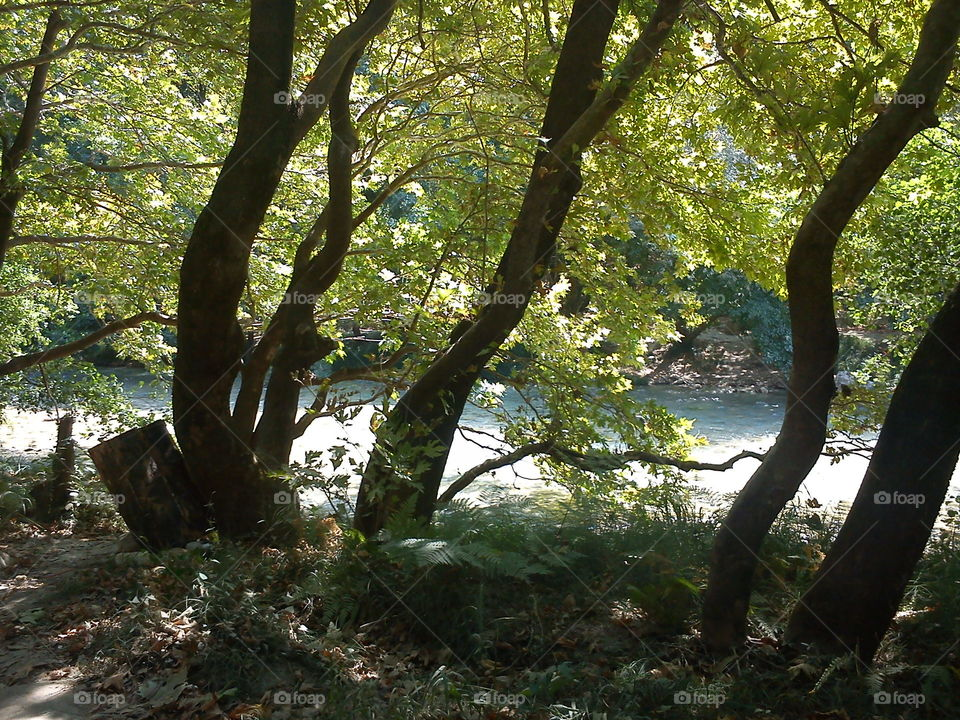 trees in the river
