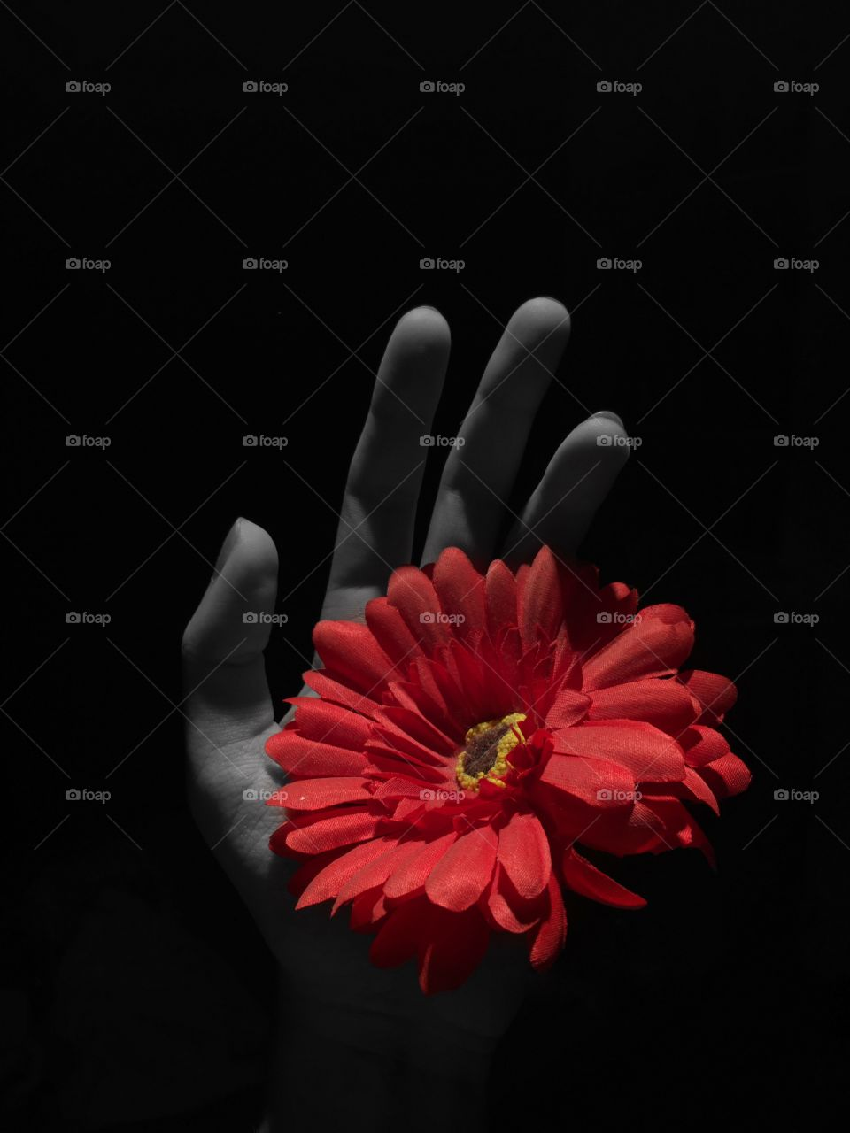 Gerbera flower. Coloursplash with black and white background.