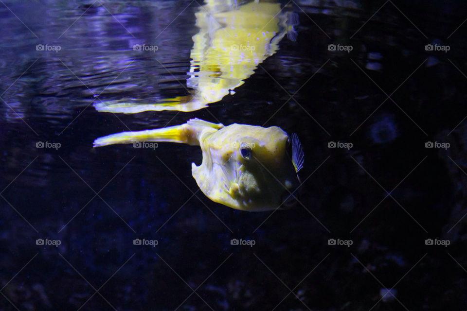 fish zoo aquarium fisch by dryair
