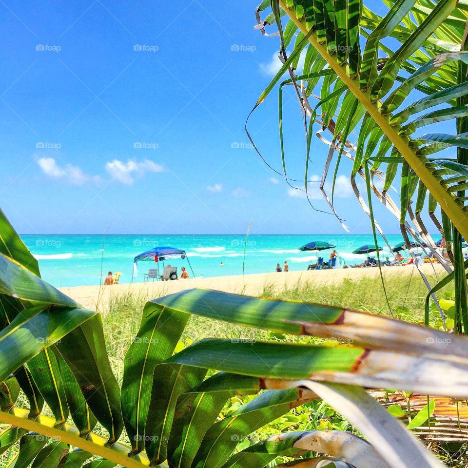 Tropical, Summer, Beach, Nature, Palm