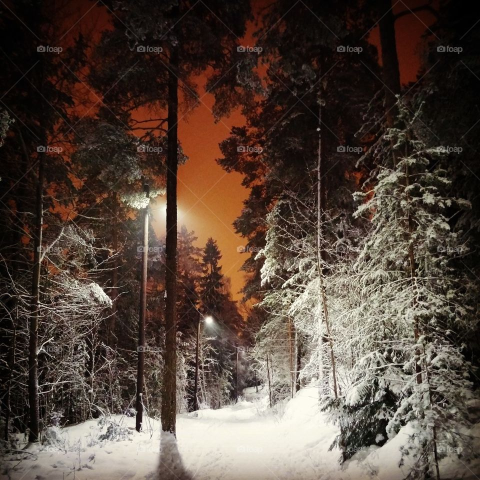 View of tree in forest during winter at night