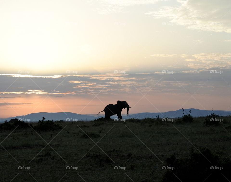 Silhouette of elephant in sunrise